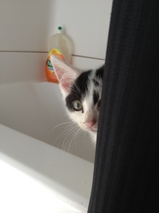 Kal-El at Jenn's house, peeking from behind a shower-curtain.