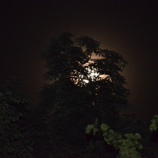 The Moon over Rittenhouse Square