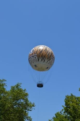 Zoo Ballon 24 Hour Photoshoot