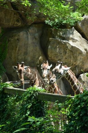 The little giraffe family 24 Hour Photoshoot