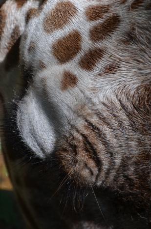 Giraffe: 24 Hour Photoshoot