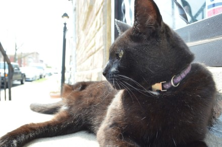 Ming the 3-legged cat. Photographed for Philadelphia Weekly