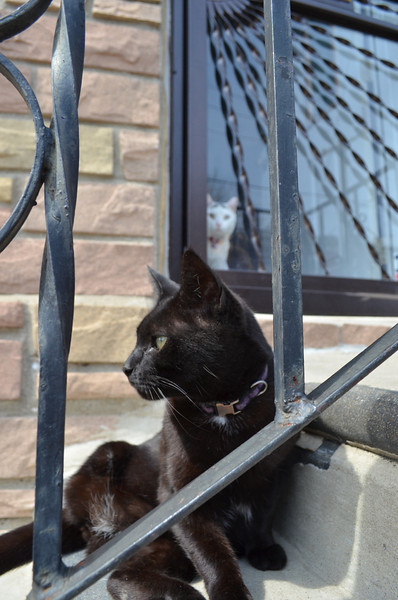 Ming sits on a stoop in Philadelphia